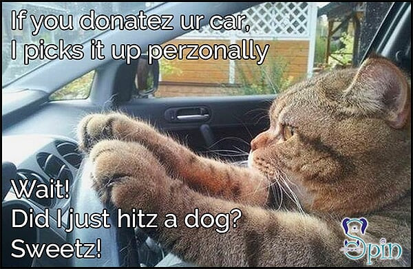 Car Donation to Charity Stray Pets in Need